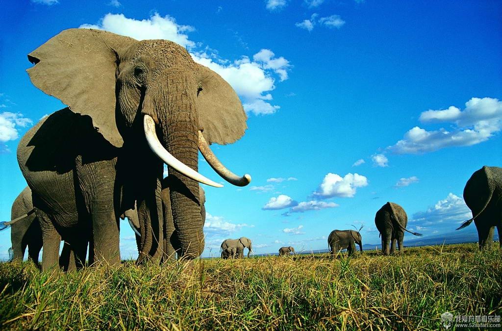 狩猎 津巴布韦 大象 100磅 我爱狩猎俱乐部
