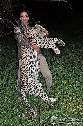 花豹狩猎 非洲豹狩猎