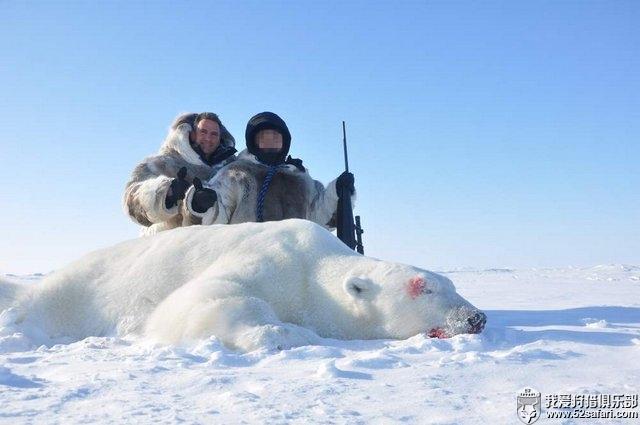 北极熊狩猎