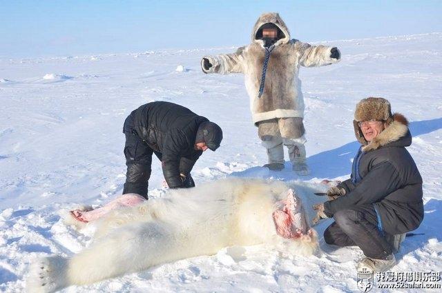北极熊战利品