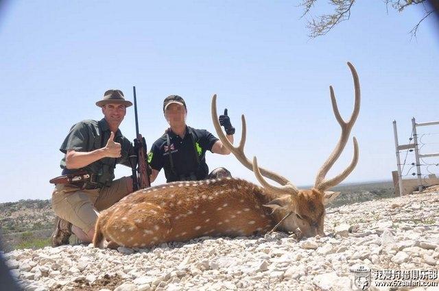 北美狩猎 梅花鹿狩猎
