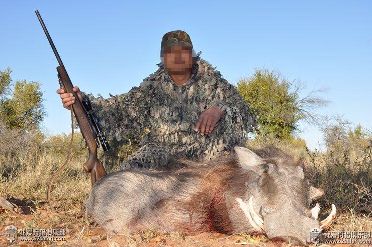 非洲疣猪狩猎