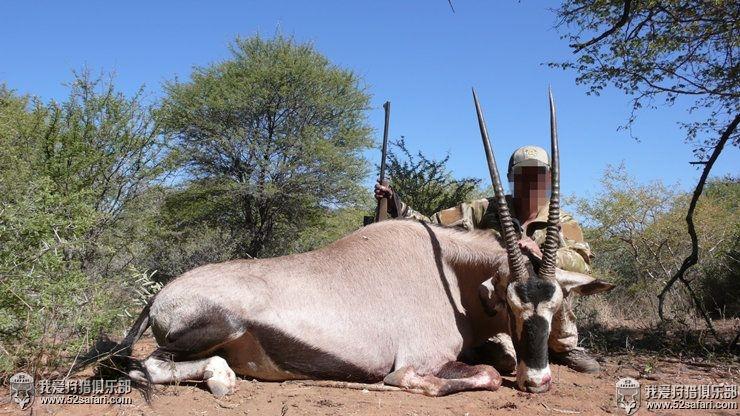 直角羚狩猎