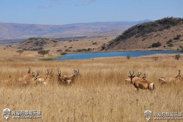 南非赤狷羚