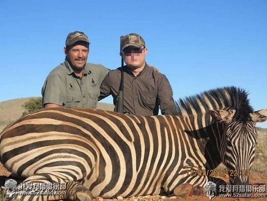 非洲斑马狩猎团