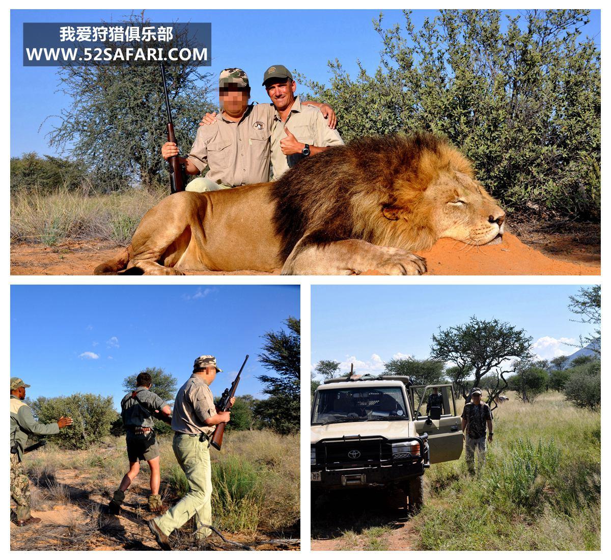 狮子狩猎 非洲狮狩猎 狮子狩猎费 狮子狩猎团