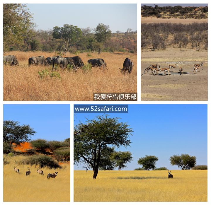 纳米比亚 狩猎 草原猎物 我爱狩猎俱乐部