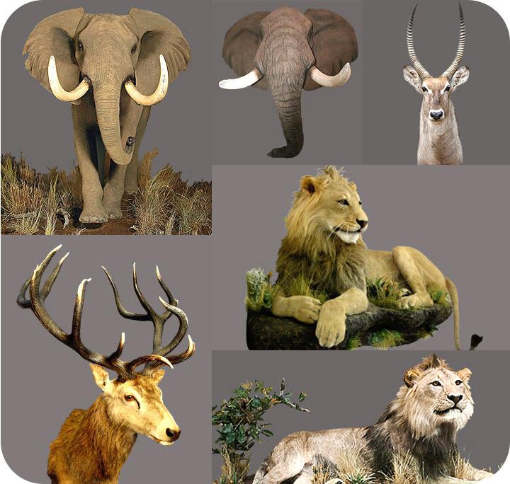 标本 私人定制 我爱狩猎俱乐部 狩猎 狩猎团