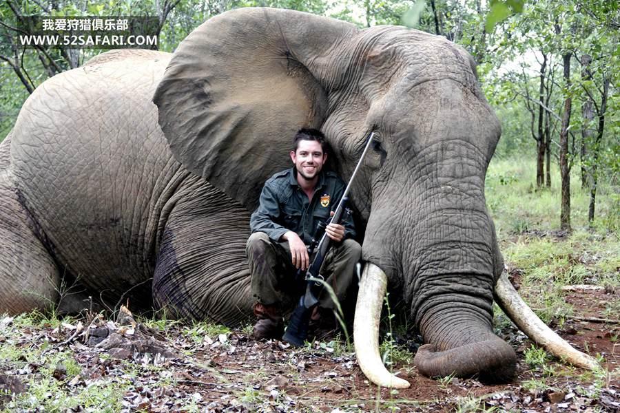 津巴布韦大象