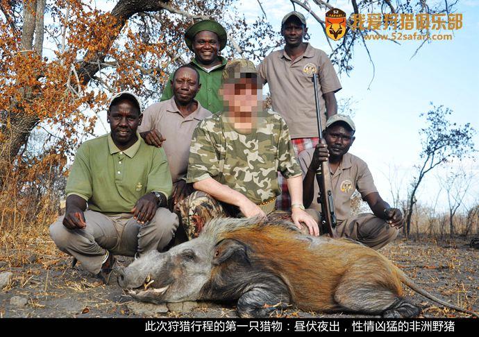 野猪狩猎 非洲野猪