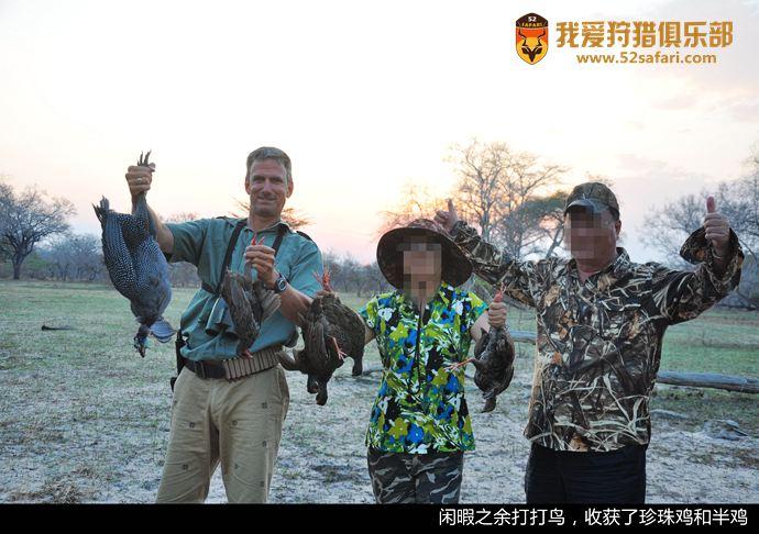 坦桑尼亚飞禽 非洲飞禽 野鸡狩猎