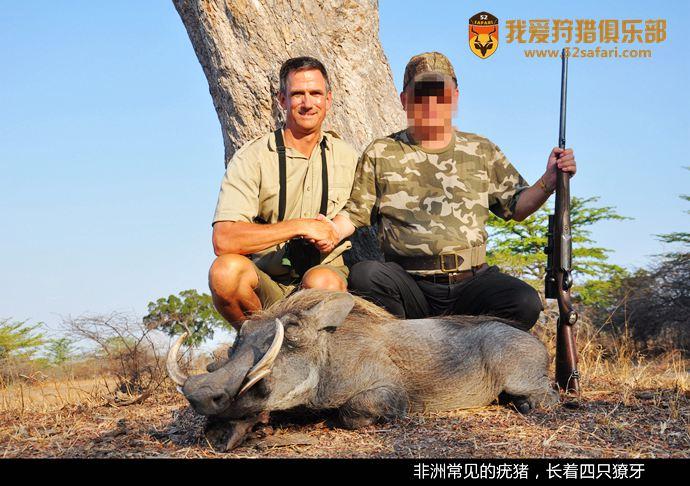 疣猪狩猎 国际狩猎团 坦桑尼亚狩猎团