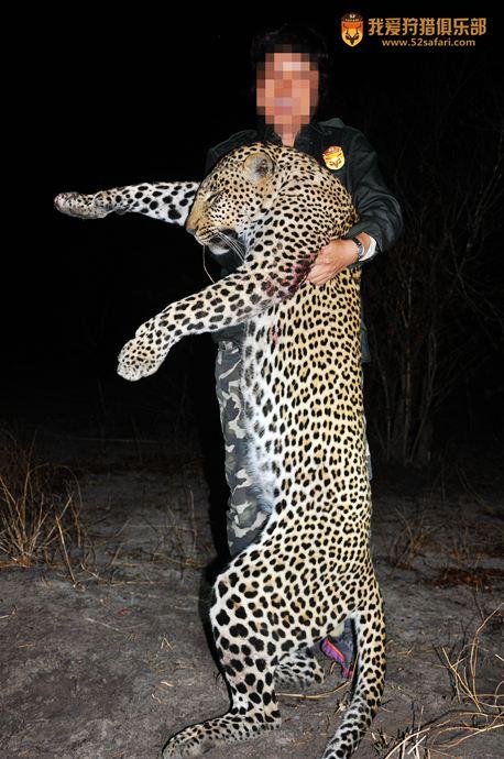 非洲豹狩猎 豹子狩猎