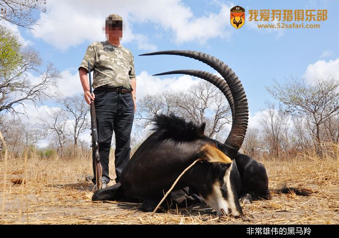 黑马羚狩猎