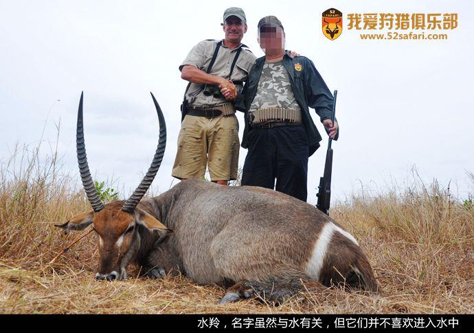 坦桑尼亚狩猎 水羚狩猎