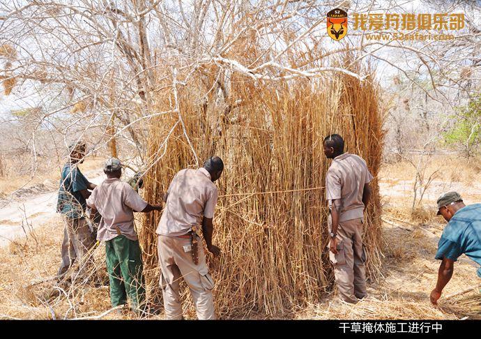 坦桑尼亚花豹狩猎