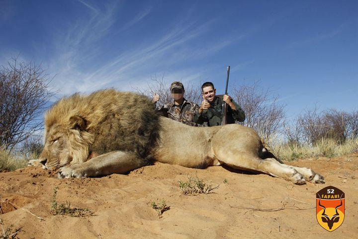 非洲狮子猎物费
