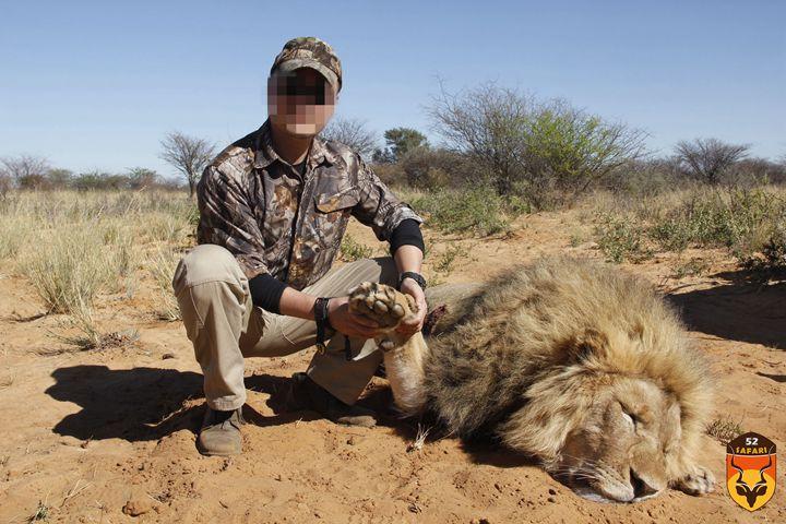 非洲狮子狩猎团