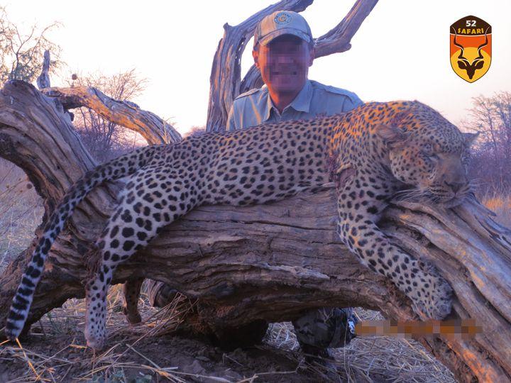 津巴布韦狩猎 津巴布韦花豹狩猎