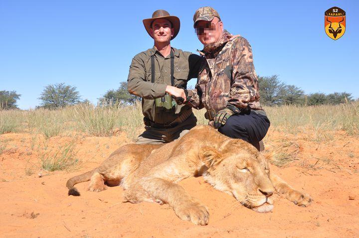 母狮子狩猎
