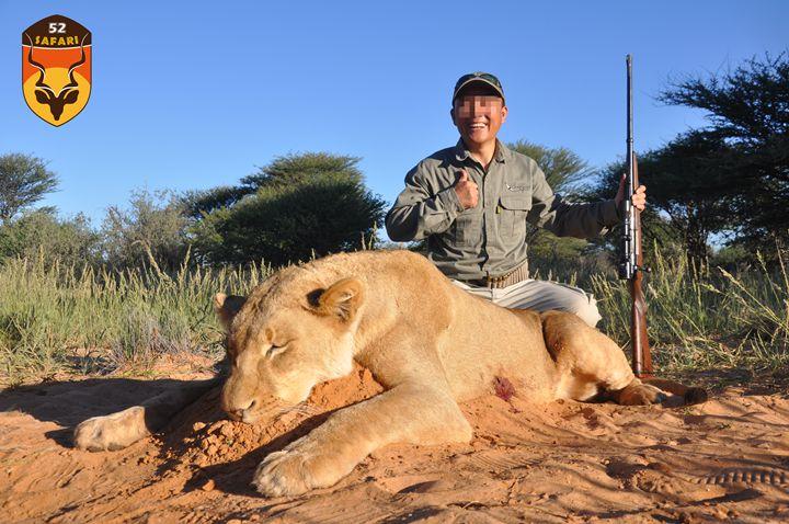 母狮子猎物