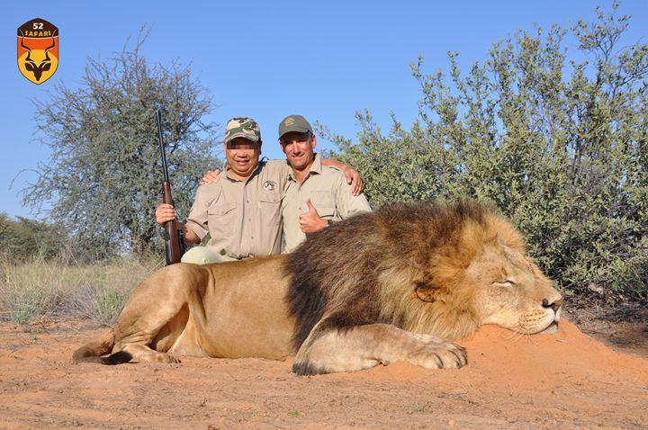 高端狮子狩猎