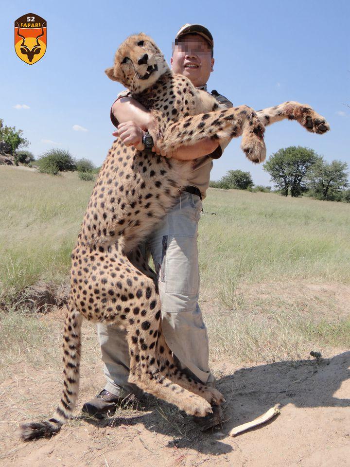 猎豹狩猎 纳米比亚狩猎