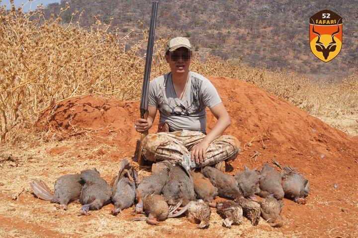 非洲珍珠鸡狩猎