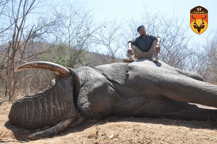 津巴布韦象狩猎