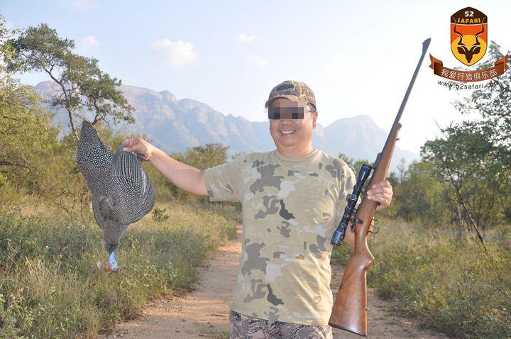 南非珍珠鸡狩猎