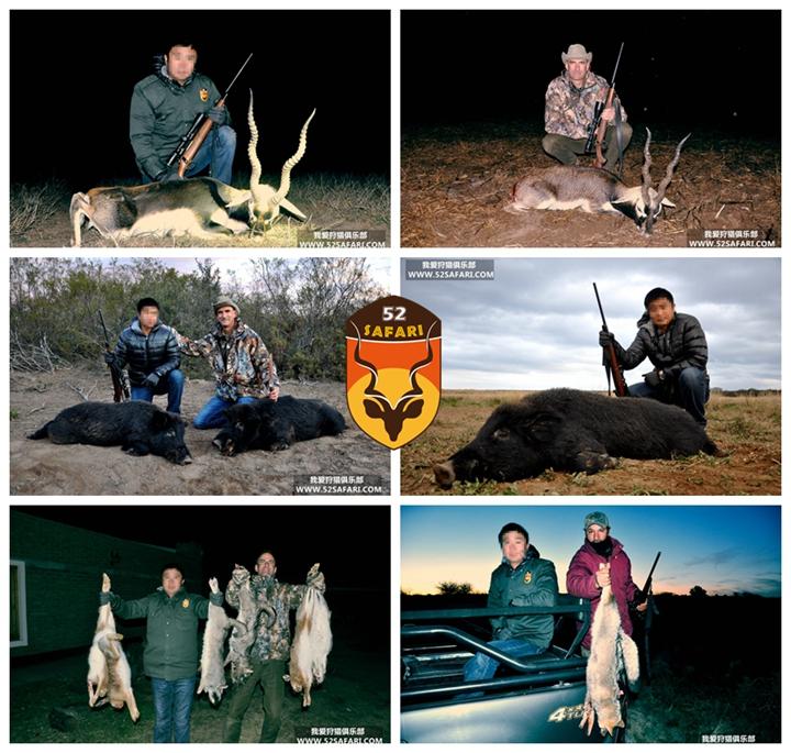 阿根廷黑羚狩猎