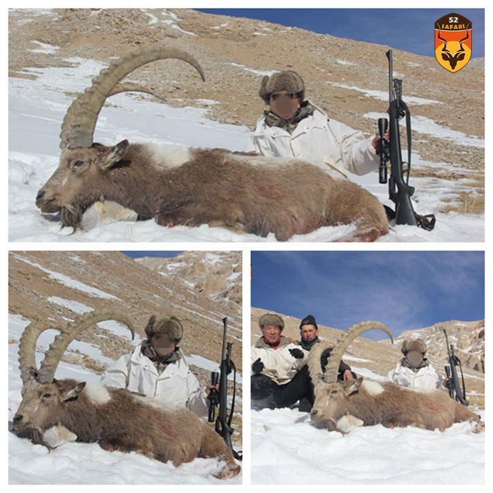 狩猎 打猎 狩猎团 我爱狩猎俱乐部 52safari 盘羊狩猎 国际狩猎 亚洲狩猎 盘羊 北山羊