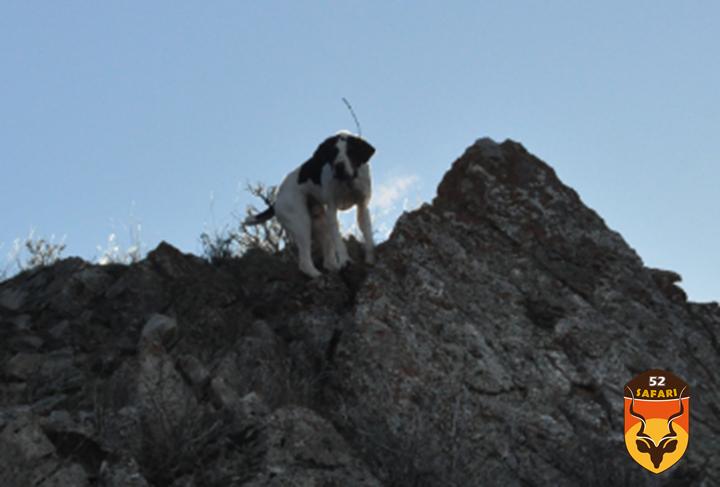 国际狩猎俱乐部展览会 美国狩猎 狩猎展览会 国际狩猎 美洲狮 美洲狮狩猎 美洲狮打猎 北美打猎 北美狩猎 猎犬