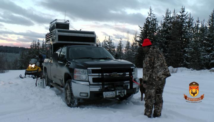 美洲狮 加拿大美洲狮 加拿大 狩猎 打猎 美洲狮打猎 国际狩猎 美洲狮狩猎 加拿大狩猎 美洲狮加拿大 加拿大打猎
