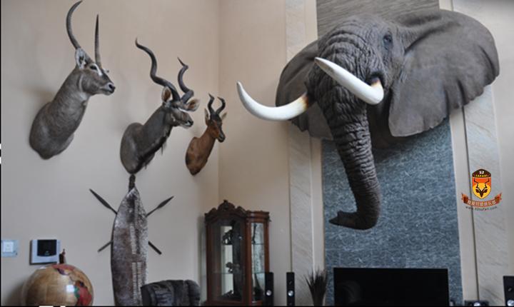 南非 国外狩猎 国际狩猎 打猎 狩猎 南非狩猎 南非海钓 海钓 国外海钓 国际海钓 标本 国内标本 中国标本