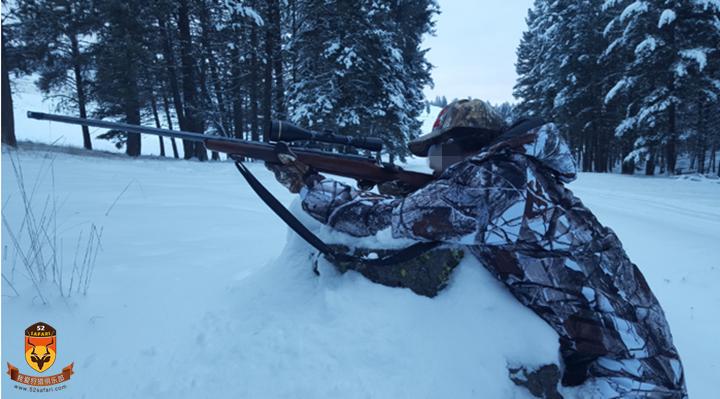狩猎美洲狮 美洲狮 加拿大 狩猎 打猎 美洲狮狩猎 国外狩猎 国外打猎 加拿大狩猎