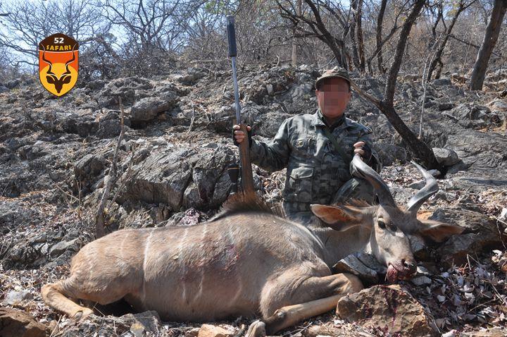 纳米比亚狩猎 狩猎 国外狩猎 国际狩猎 非洲狩猎 纳米比亚 捻角羚 非洲捻角羚