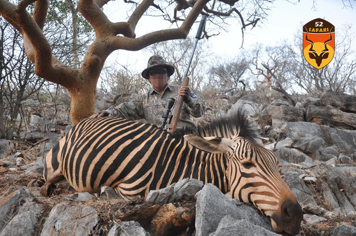 纳米比亚狩猎 狩猎 国外狩猎 国际狩猎 非洲狩猎 纳米比亚 山斑马 山斑马狩猎 山斑马打猎