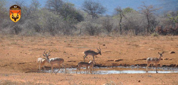 纳米比亚狩猎 狩猎 国外狩猎 国际狩猎 非洲狩猎 纳米比亚 纳米比亚打猎 打猎