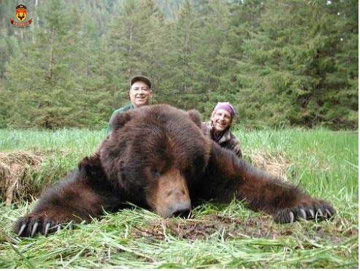 游艇穿熊狩猎