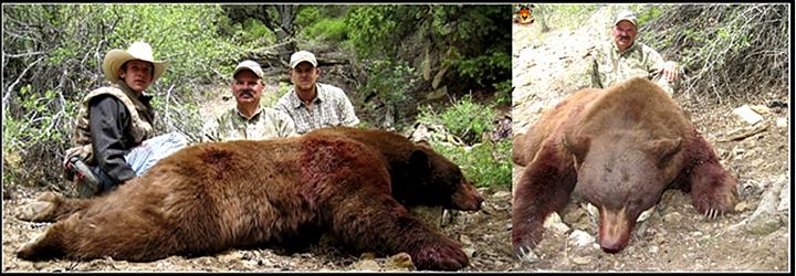 美国黑熊狩猎团