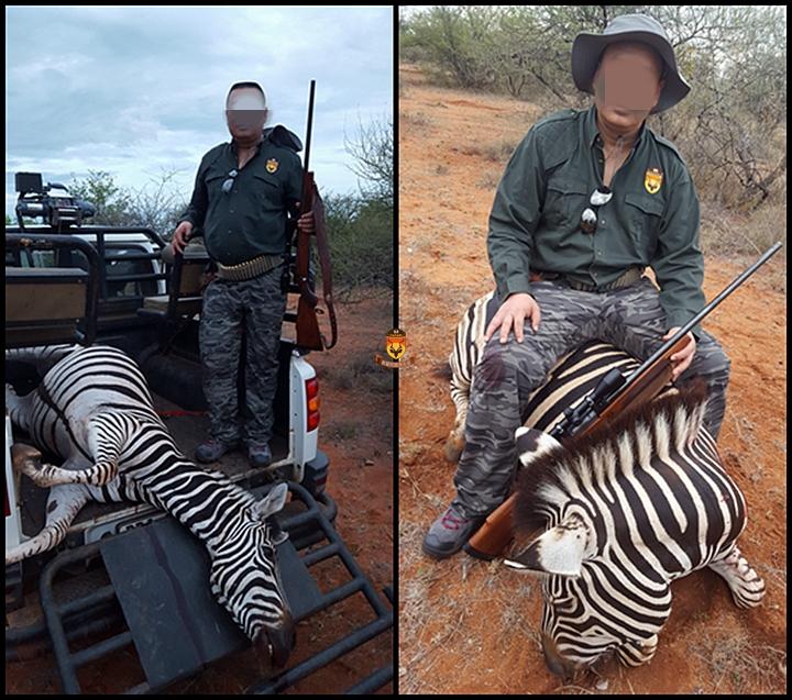 南非 非洲狩猎 狩猎 打猎 猎人 国外狩猎 国外打猎 狩猎公司 中国狩猎公司 猎场 大羚羊 黑斑羚 斑马 非洲斑马 草原斑马 角马