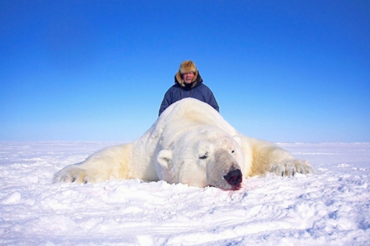 中国人北极熊狩猎