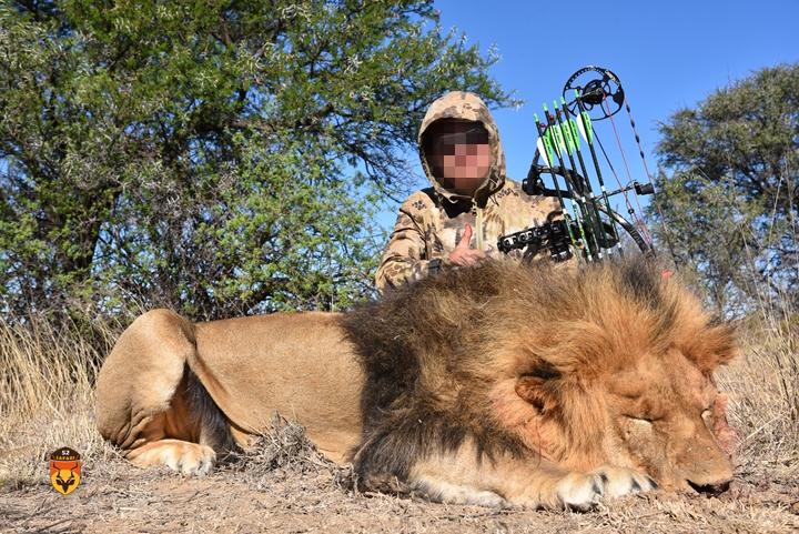 狮子狩猎 国际狩猎