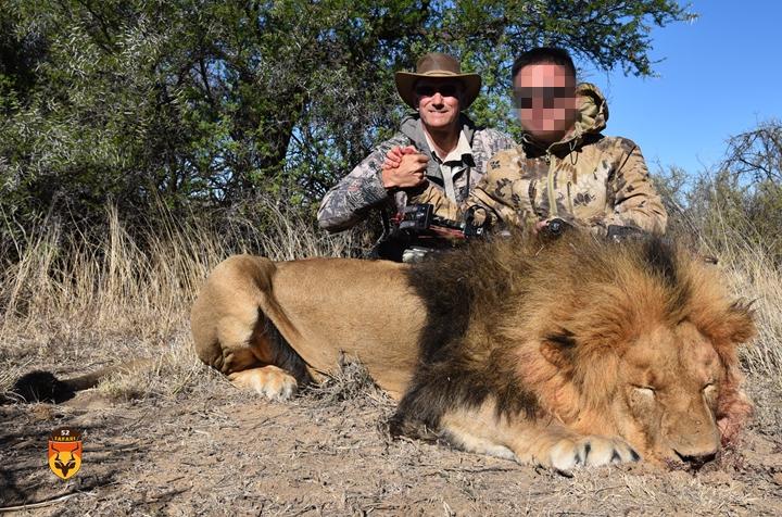 南非狮子狩猎 狮子弓猎