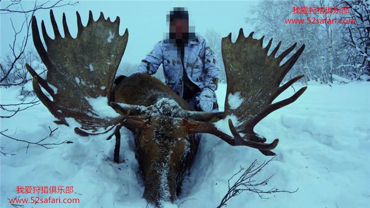 俄罗斯 驼鹿狩猎 狩猎 俄罗斯驼鹿狩猎 中国狩猎公司 狩猎 打猎 国外狩猎 国外打猎 驼鹿打猎 驼鹿 勘察加驼鹿 勘察加驼鹿狩猎 勘察加狩猎 勘察加棕熊狩猎 勘察加棕熊驼鹿狩猎 棕熊驼鹿狩猎 俄罗斯勘察加狩猎