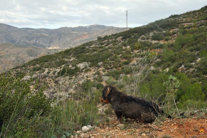 西班牙狩猎 狩猎 欧洲狩猎 欧洲围猎  北山羊狩猎 欧洲盘羊狩猎 巴巴里蛮羊狩猎 西班牙打猎 中国狩猎公司 国外狩猎 高端定制 高端旅游