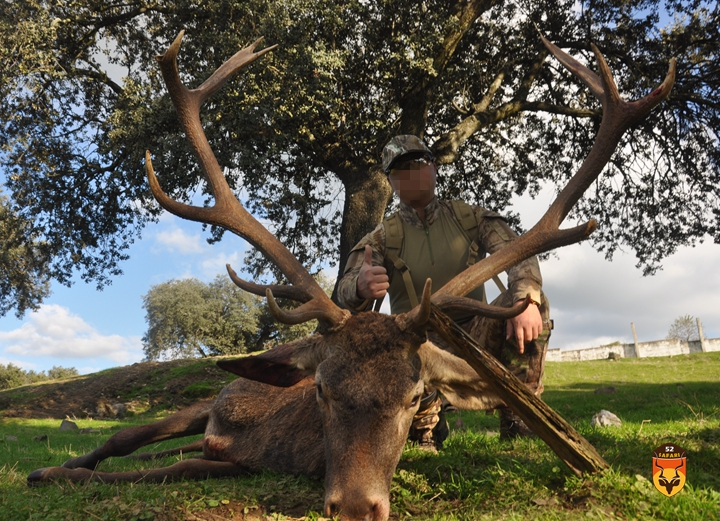 西班牙鹿狩猎