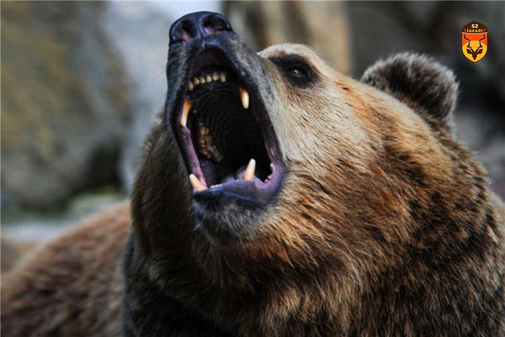 俄罗斯棕熊 俄罗斯熊 贝加尔湖狩猎 贝加尔湖打猎 贝加尔湖 贝加尔湖棕熊 贝加尔湖熊 北美狩猎 黑熊狩猎 棕熊狩猎 驼鹿狩猎 熊狩猎 熊打猎 国外狩猎 国外打猎 国际狩猎 国际打猎 狩猎团 狩猎俱乐部 南非狩猎 非洲狩猎 纳米比亚狩猎 非洲打猎 南非打猎 纳米比亚打猎 定制狩猎 定制旅游 高端旅游 花豹狩猎 豹子狩猎 狮子狩猎 犀牛狩猎 俄罗斯狩猎 灰狼狩猎 灰狼 俄罗斯 驼鹿狩猎 狩猎 俄罗斯驼鹿狩猎 中国狩猎公司 狩猎 打猎 国外狩猎 国外打猎 驼鹿打猎 驼鹿 勘察加驼鹿 勘察加驼鹿狩猎 勘察加狩猎 勘察加棕熊狩猎 勘察加棕熊驼鹿狩猎 棕熊驼鹿狩猎 俄罗斯勘察加狩猎 灰狼狩猎 灰狼 俄罗斯打狼 狼 猎狼  灰熊狩猎 黑熊狩猎 棕熊狩猎 驼鹿狩猎 熊狩猎 熊打猎 国外狩猎 国外打猎 国际狩猎 国际打猎 狩猎团 狩猎俱乐部 南非狩猎 非洲狩猎  非洲打猎 南非打猎 纳米比亚打猎 非洲海钓 定制狩猎 定制旅游 高端旅游  犀牛狩猎 俄罗斯狩猎 灰狼狩猎 灰狼 东欧灰狼 加拿大狩猎 美国狩猎 灰熊狩猎