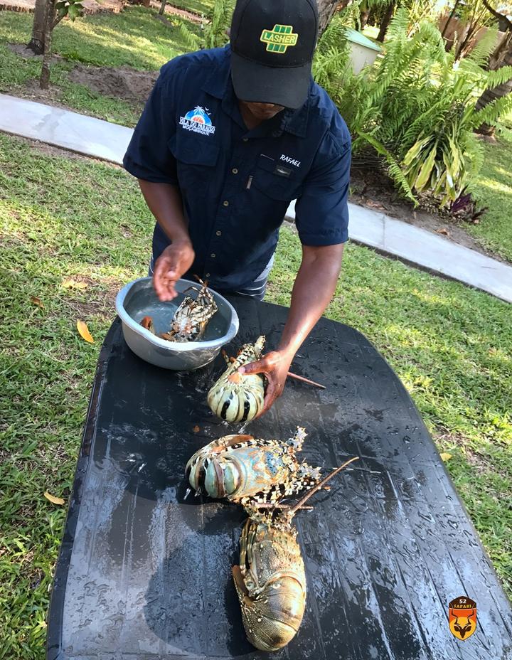莫桑比克龙虾